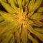 Telluride Hydroponics & Organics